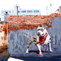 Mural on derelict wall in Woodstock. I ART SA Community Mural Project, Woodstock, Cape Town