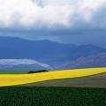 Landscape near Caledon, 1996