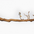 Gift Bearer 5, 2018. Root with metal, bird bone, nylon rope, glass stopper and beads, 33 x 137 x 16 cm