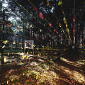 <em>Life Tunnel</em>. 2016. Leaves, strings & mirror. Site-specific installation
