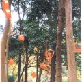 <em>Fruits of nature</em>. 2003. Found objects. Site-specific installation