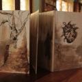 Myth (The bird-dreaming baobab) - Mito (O embondeiro que sonhava pássaros), 2007-2012