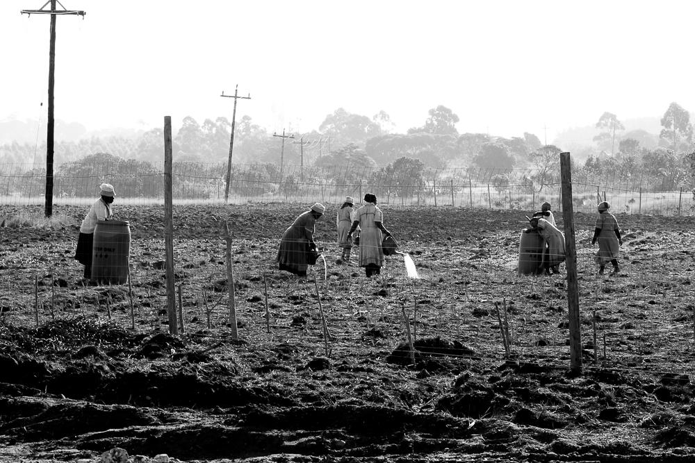 Mandisa Buthelezi, Rural KZN 5, 2014, KwaZulu Natal