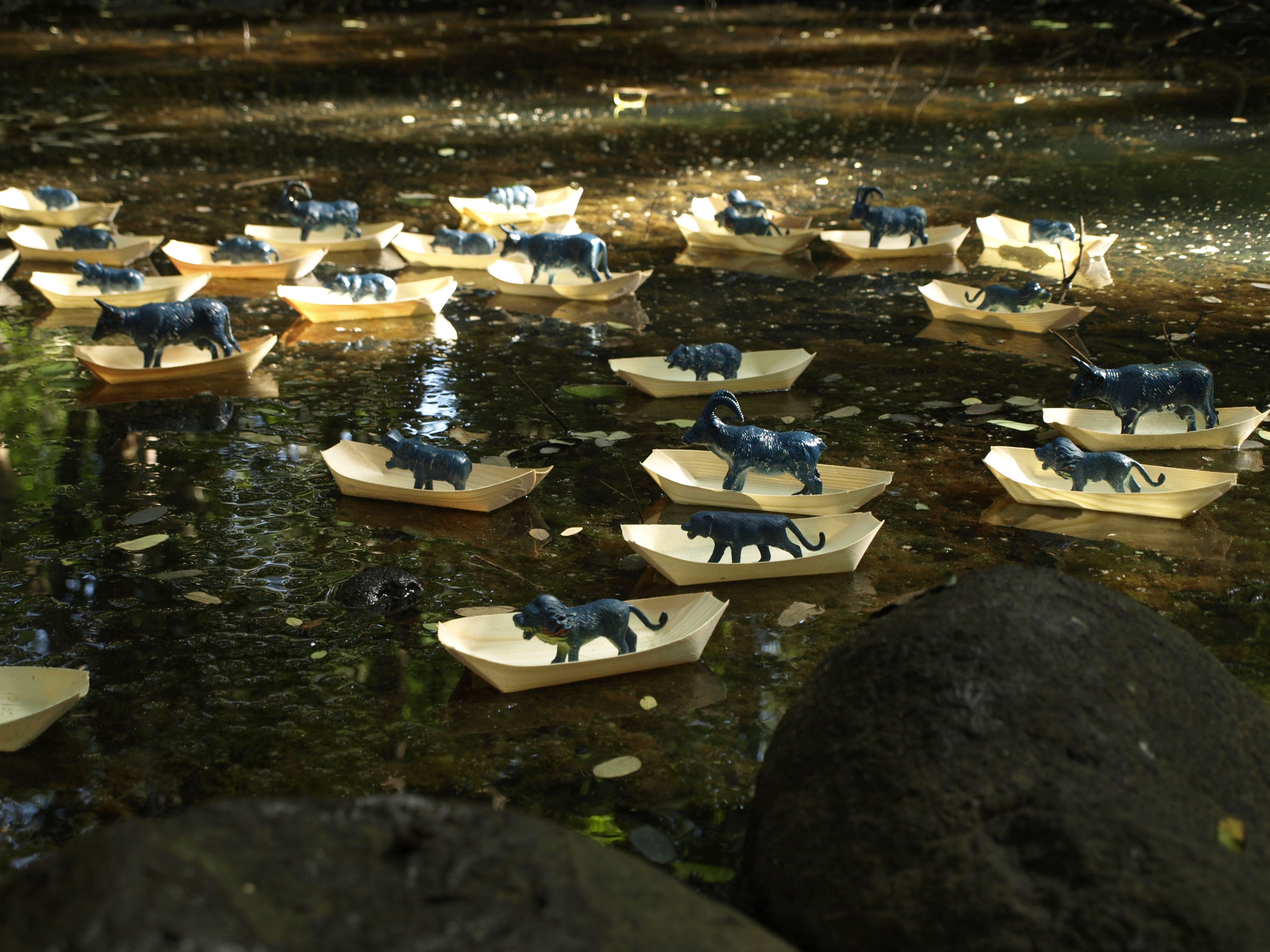 <em>Migration</em> [Installation in a river]. 2011. Small bamboo boats, painted plastic toy animals & glue. 500x500x20cm