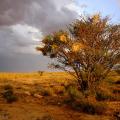 Kenhardt nests, Karoo, 2017. Photographic print
